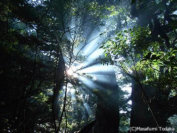場からの贈り物 屋久島奥岳の森にて